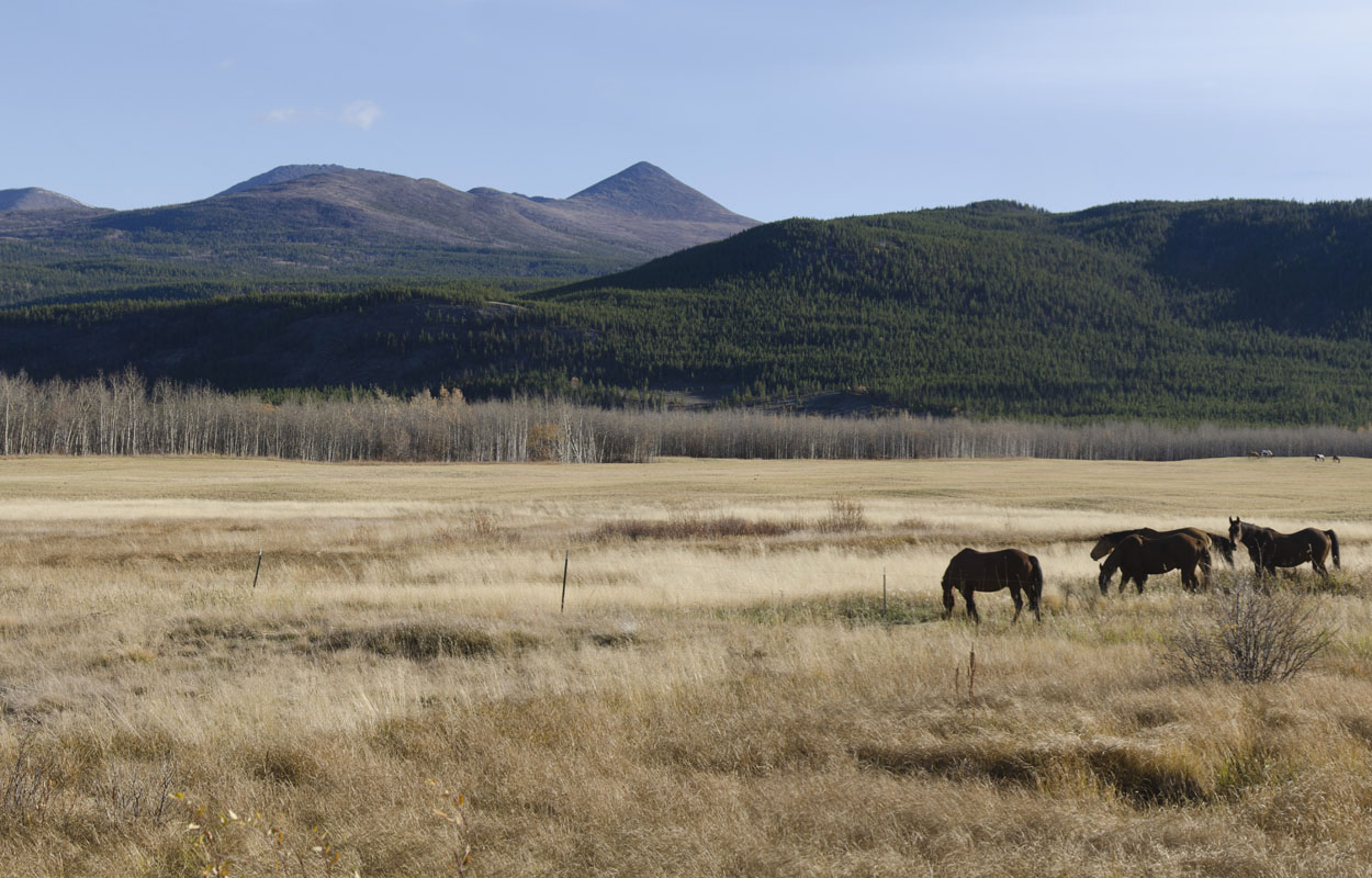 Horses grazing in an autumn field along, mountains in the background
