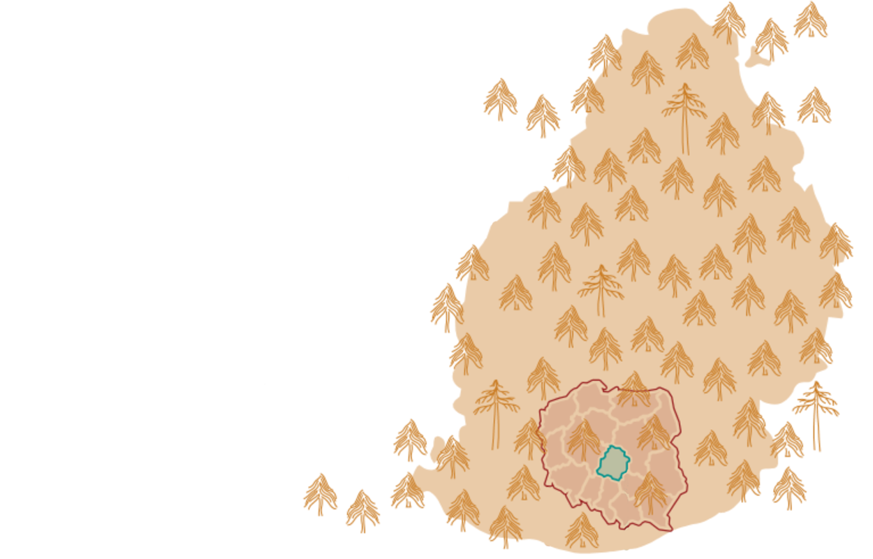 Illustration of hand-drawn trees with overlay map of planning area