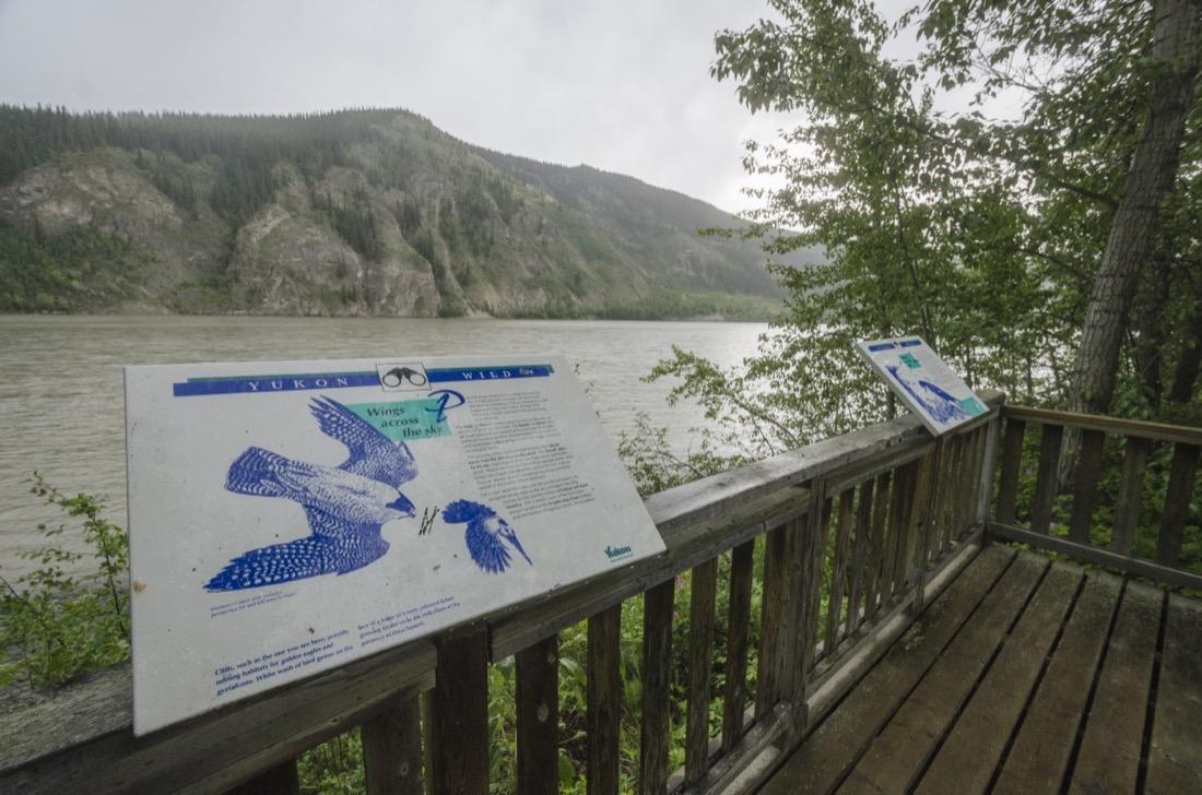 Interpretive panels and viewing deck at Yukon River Campground, Yukon