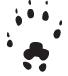 Empreinte de musaraigne (patte antérieure) : 0,6 cm x 0,5 cm.