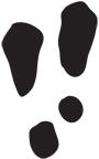 Empreintes de lièvre d'Amérique : 11,3 cm x 9,4 cm.