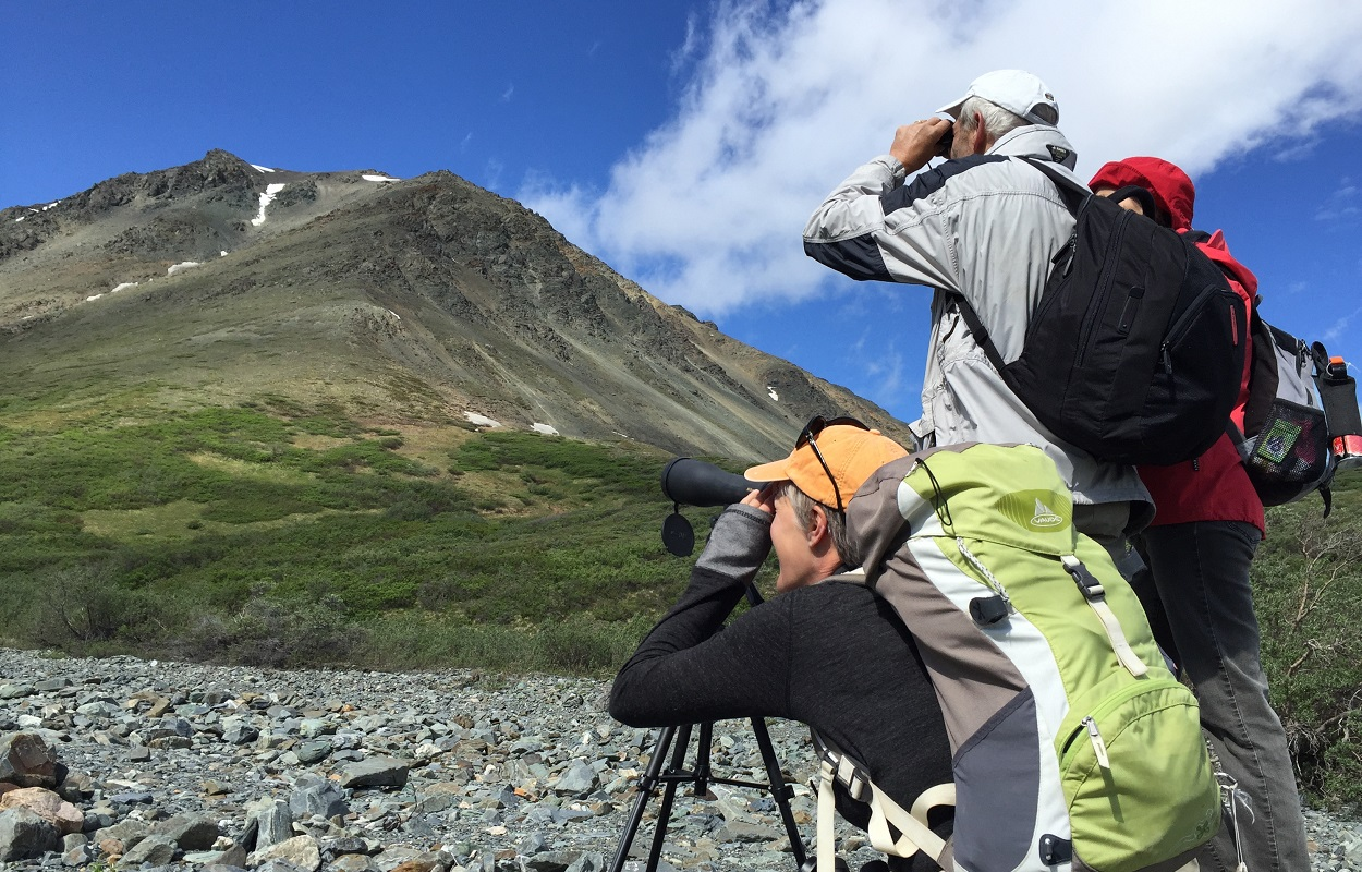 Wildlife viewers in summer