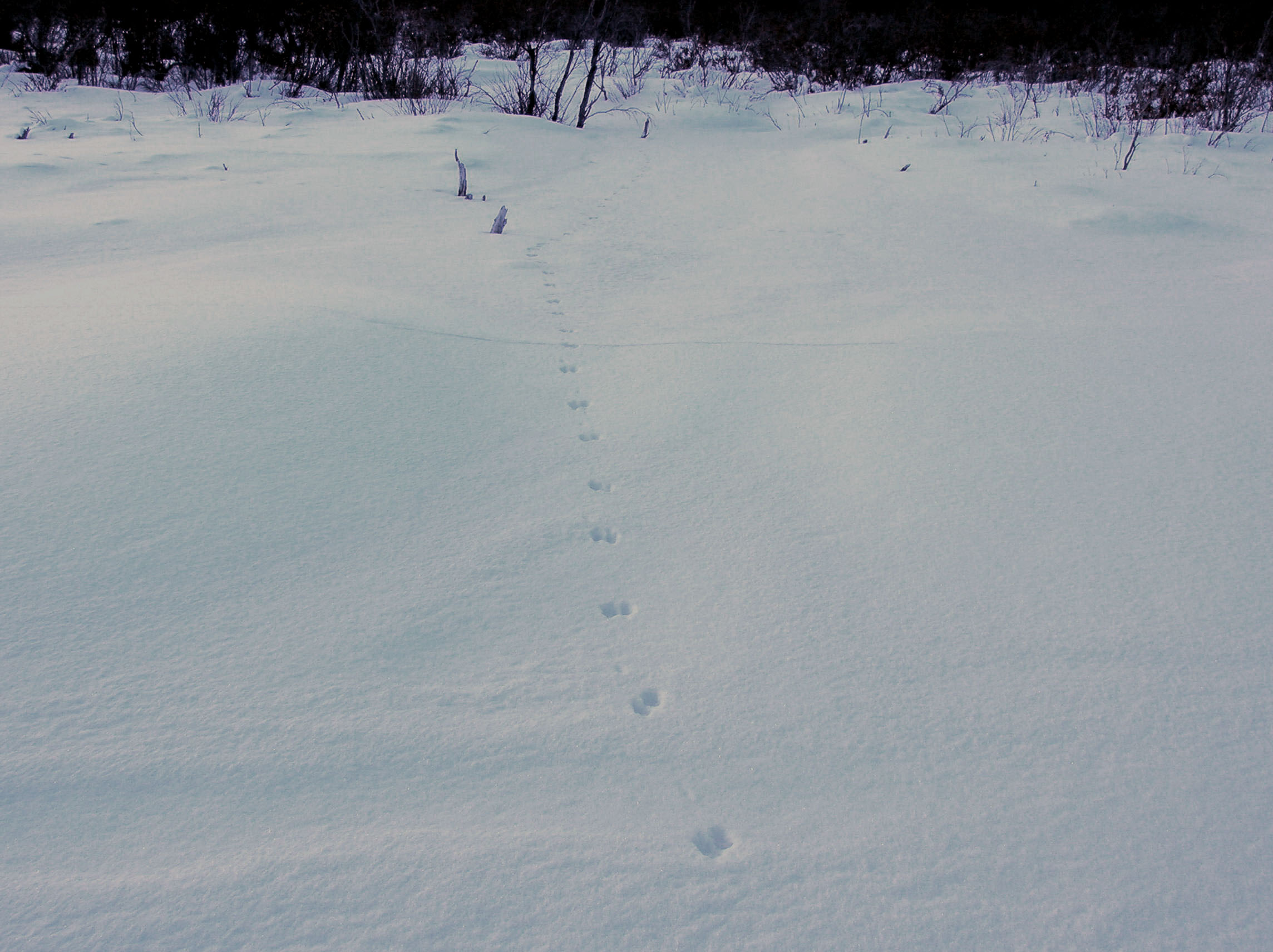Tracks on snow.