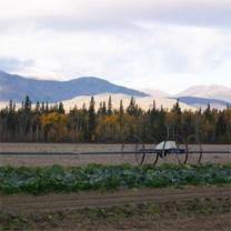 Yukon Grain Farm