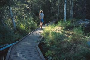 Forest path and boardwalk, Klondike River Campground, Yukon.