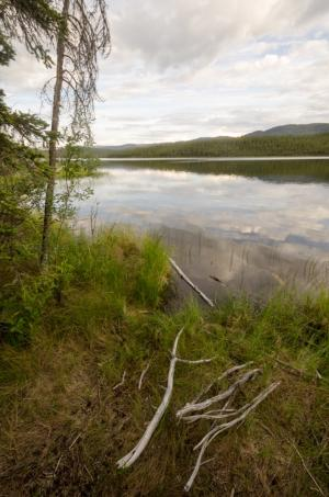 Wetland shore at Johnson Lake Campground