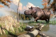 Fossils suggest ancient rhinos and turtles once roamed Yukon