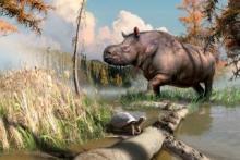 Des fossiles découverts dans les années 1970 indiquent que des rhinocéros et des tortues peuplaient le Yukon par le passé.
